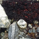 Uist rocks and seaweed